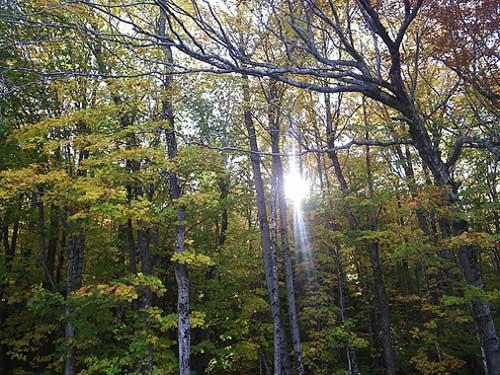 Appalacian_trail